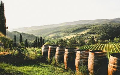 6 Meest populaire Italiaanse druivensoorten