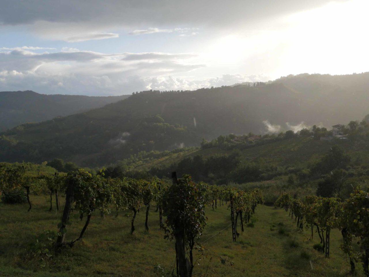 Landschap met mist Amaracmand