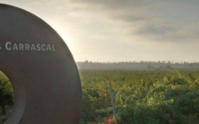 Wijnhuis Chozas Carrascal – Impopulair druifje wordt held in het wijnglas!